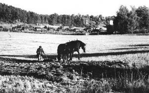 I sakta mak. En bonde plöjer mark som tillhörde Vallby kronohemman. Bilden togs 1934.