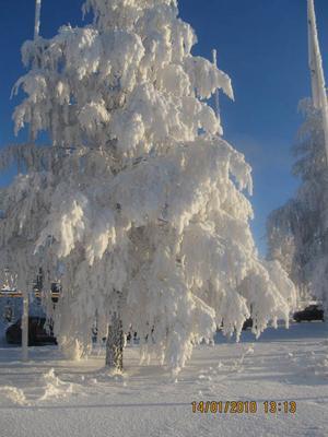 Den vackraste rimfrosten vintern 2010. Bilderna tagna vid Storsjöstråket. Foto: Mona Wallander