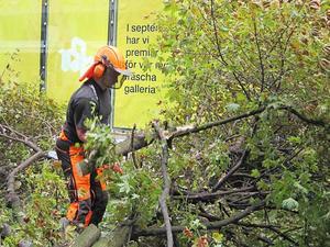 Peab-arbetaren Tomas Törnqvist i närkamp med träden.
