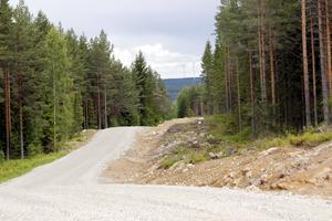 Reservatet med den hotade miljön ligger bara något hundratal meter från den breda grusvägen som anlagts för vindkraftsbyggets skull men som också kan användas för virkestransporter.