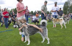 Jämthundstiken Rämnastigens Alba var utställningens snyggaste hund.