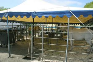 Hästar är en naturlig del i en cirkusföreställning. Brazil Jack har både stora...