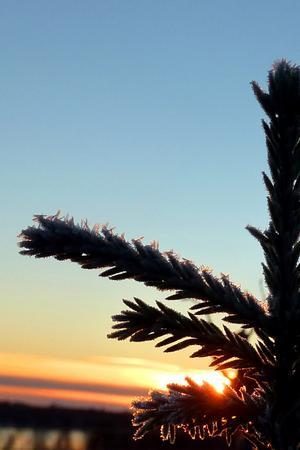 Soluppgång en tidig morgon vid skidspåren i klackberg