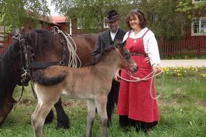 Fölet Hälsing får följa med sin mamma och Roger Svärd och Maria Strömbäck Svärd på olika uppdrag.