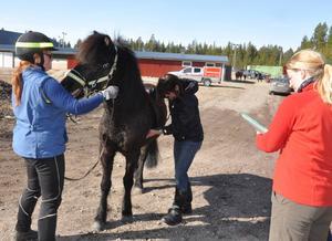 Therese Westerströms häst Fjalar kollas upp av veterinären Karin Landin samtidigt som Evelina Carnebo för protokoll.