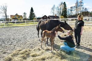 Susanne Andersson och Ann Lindfors gosar med det lilla fölet Princess Kei'em. Mamman Dream Silas tittar nyfiket på.