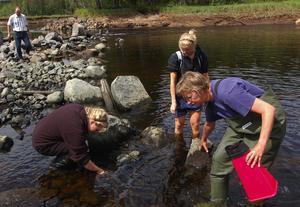 På musseljakt. Emelie Lius och Linnea Johansson från naturvetenskapsprogrammet vid Leksands gymnasium letar efter flodpärlmusslor. Närmast i bild är Ann-Sofie Ahlfors som är Fortums egen miljöhandläggare. I bakgrunden följer kommunens miljöchef, Tomas Isaksson, deras arbete.