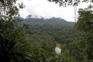 Danum Valley från områdets bästa utsiktspunkt. Området till vänster om floden har i princip aldrig beträtts av människor.