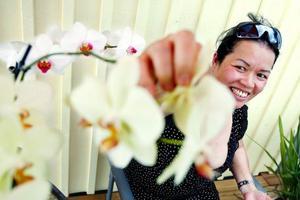 """Att samla ihop 54 stycken orkidéer har tagit Mai Näsman på en resa runt om i Sverige. """"Jag brukar ringa butiker i Göteborg och i Falun och andra ställen och fråga vilka sorter de ha. De säger att de inte kan ta hem si och så, den och den sorten kan man inte odla här i Sverige. Men då säger jag att jomen ta hem den. Jag fixar det"""" , säger Mai Näsman."""