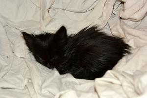 Den här kattungen, på cirka tre veckor, räddades från en tomt med ett trettiotal förvildade katter. Den låg öppet på gräsmattan utan mamma i närheten, den var sjuk och full med ohyra.