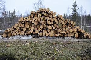Vissa avverkningar är ur ekologisk synpunkt rimligare än andra.