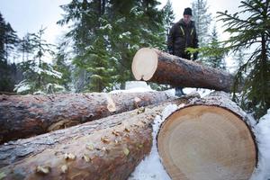 Det är prima snickarvirke som Roger Melin kan leverera från sin skog i Tosätter, Enånger. Det är ont om skog som vuxit till sig i 140 år.