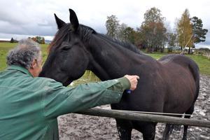 Kiriakos Mitros pekar på B.B.S. Cleorinos bokblad, där smällen tog när hästen blev påkörd av en lätt lastbil för snart två år sedan.