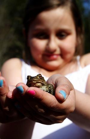 Åttaåriga Alicia Landmark från Södermalm är inte rädd för grodor.