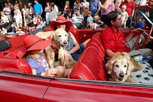 Trött på vinter och kyla har jag blivit. Så här kommer en sommarbild med glada hundar och människor.