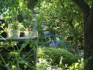 Kräver sitt. En varierande trädgård med täta rabatter är rolig och njutbar men kräver tid och engagemang. Foto: Katarina Kihlberg
