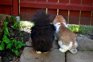 Katten Simpe och Kaninen Wilda diskuterar rymningsteknik..