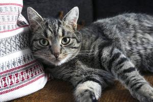 I hemmet tillbringar Gösta gärna sin tid vid köksfönstret men soffan duger också bra.