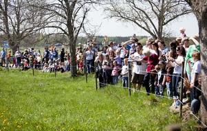 Storpublik. Hundratals besökare valde att besöka Kärrbo i det vackra vädret - alla höll sig på rätt sida stängslet med tanke på tjurarna.