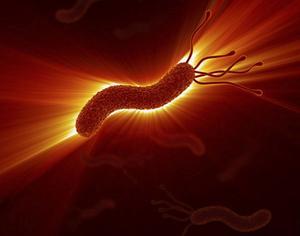 Det finns långt fler arter av bakterier och andra mikroorganismer än vad forskarna anat.