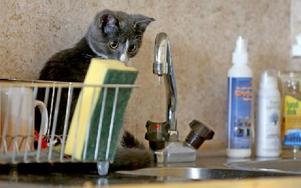 Ja, på bänken sitter en katt och tittar på vattenstrålen ur kranen. Foto: Johnny Fredborg