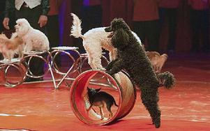Artisterna Varadis uppträder med ett hundnummer.