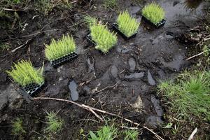 Facket har länge varnat för oseriösa företag som utnyttjar gästarebetare för att sätta plant i skogen.