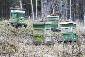 Några av Alf Anderssons 80 bikupor. De flesta finns ute i skogen.