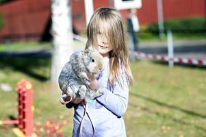 Sjuåriga Alice Åman försökte lära sin kanin Simba att hoppa.