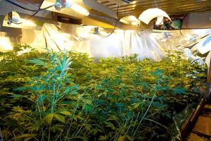 1. Reflekterande specialdukar och avancerad värmebelysning har satts in för bästa effekt.2. Här hänger cannabis på torkning i korgar.3. Nyligen skördad cannabis som får torka till sig. 4. De misstänkta har installerat en rejäl ventilationsanläggning för odlingen.
