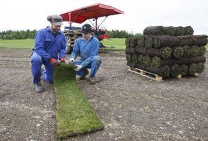 Thomas Hansson och Håkan Antonsson kontrollerar med jämna mellanrum att gräsmattsbitarna håller jämn kvalitet.