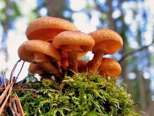 Ätliga svampar..vet ej..men läcker färg iaf.