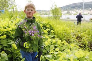 Alexander Gabrielsson från Frösön hittade massor av midsommarblomster till majstången. För säkerhets skull behöll han vantarna på.
