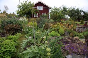 Anna blandar både grönsaker och blommor i sina odlingar. Här växer till exempel kronärtskocka, tuperos, kardemumma, smultronspenat, broccoli och bolltistel.