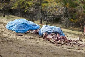 Flera säckar fulla av älgrester har dumpats på åsen. Förutom att det stinker illa riskerar innehållet att dra till sig björn.