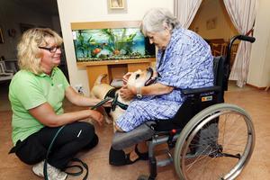 Maria Rådberg längtar efter att Kristinagården får tillbaka sin vårdhund. Här uppvaktas hon av Mia Blom Andersson och labradoren Nilla, vårdhundselev och tänkbar vårdhund på äldreboendet.