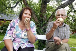 """Genom fruktförmedlingen kan de som inte har några egna fruktträd få kontakt med personer som har exempelvis äppelträd. """"Egenproducerat skapar ett mervärde"""" säger Per-Olof Erickson. I går var han hemma hos Yvonne Aurosell och plockade."""