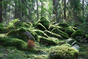 En dag i skogen mellan Ramnäs och Skinskatteberg