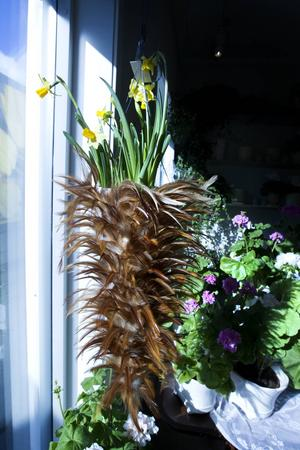 I en strut med fjädrar visar påskliljor upp sig i fönstret.