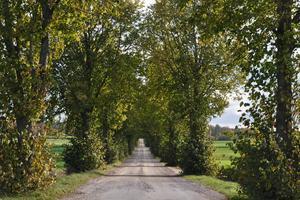 En bild på den pampiga allén till Sörby gård.