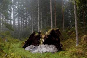 Roger Karlsson visar fotografi i Wij. Här Åmostskogen.