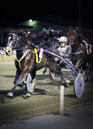 Ulf Olsson tog hem championatet i Östersund, trots att han gick segerlös från tisdagens final. Här ser vi honom med hästen Kung Keno.