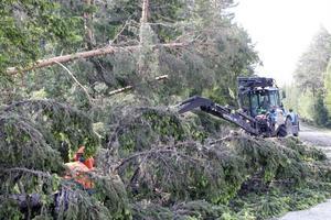 Väg 296 mellan Los och Voxna, särskilt vid Karlsberg, var vägen på tisdag eftermiddag helt oframkomlig. De omkullblåsta träden var många.