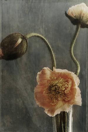 Ewa-Marie Rundquist, Vallmo 22, Pigmentprint, 2014.