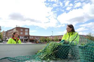 Kristina Serdoc och Annsofie Granfors har inte feriepraktik men jobbar som sommarvikarier på kommunen med att rensa ogräs och annat skräp från gröna områden.