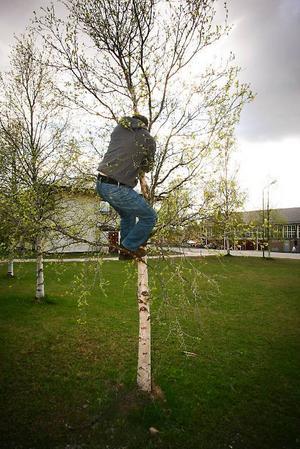 Exklusivt för ÖP klättrar Sebastian Stumpf upp i ett litet träd invid Färgfabriken, en installation han just nu visar i utställningen Levitation.