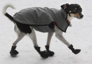 Även för hundar gäller det att ha varmt på fötterna när det är kallt ute.