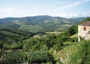 Vingårdar i Toscana. Det tempererade klimatet gör det svårare att producera ekologiska viner i Europa än i Chile och Argentina till exempel, där klimatet är torrt och mer jämnt.