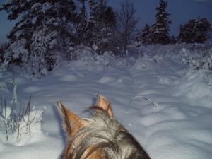 Hästen Ville hittar inte stigen i Solbacka första advent.