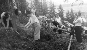 Arbetet med att rensa backen från träd gjordes för hand och i arbetet deltog såväl män som kvinnor.